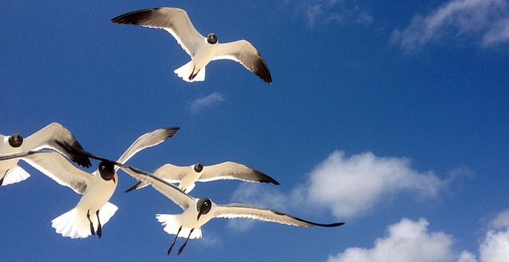 Aves do céu