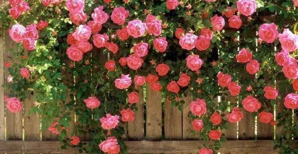 Roseiral