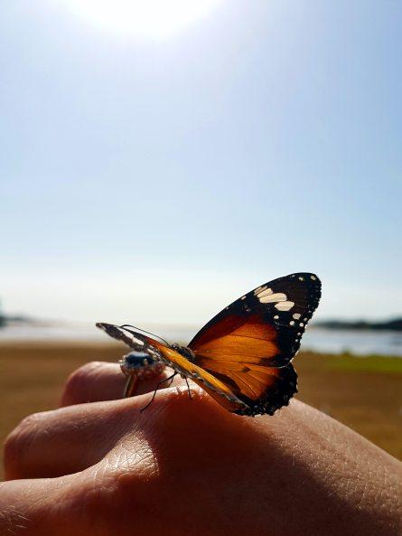anel-de-noivado-de-safira-azul-natural-fim-cima-borboleta-1846937