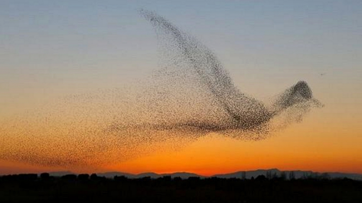Pássaros em revoada